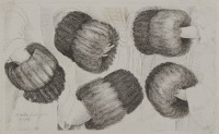 MUFF IN FIVE VIEWS [Václav Hollar (1607-1677)]