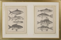 Two Engravings with Fish []