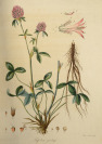 Set of Six Illustrated Handbooks with Botanical Themes [Friedrich Dreves Friedrich Gottlob Hayne (1763-1832)]